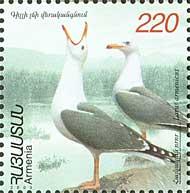 Фауна, Чайки, 1м; 220 Драм