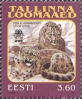 Таллиннский зоопарк, Снежный барс, 1м; 3.60 Кр