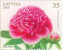 Флора, Пионы, 1м; 35c