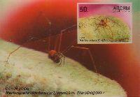Насекомые Абхазии, 3-D, блок; 50.0 руб