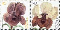 Флора, ирисы, 2м; 40, 170 Драм