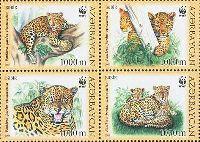 WWF, Леопарды, 4м в квартблоке; 1000 M x 4