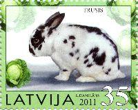 Домашние животные, Кролик, 1м; 35с