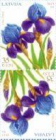 Флора, Ирисы, тет-беш, 2м; 35c x 2