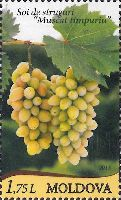 Виноград, 1м; 1.75 Лей