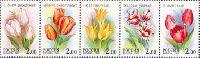 Флора, Тюльпаны, 5м в сцепке; 2.0 руб х 5