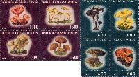 Съедобные грибы, 8м; 600, 1500 руб х 4