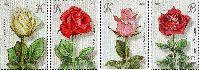 """Флора, Розы, 4м; """"K"""" x 3, """"B"""""""